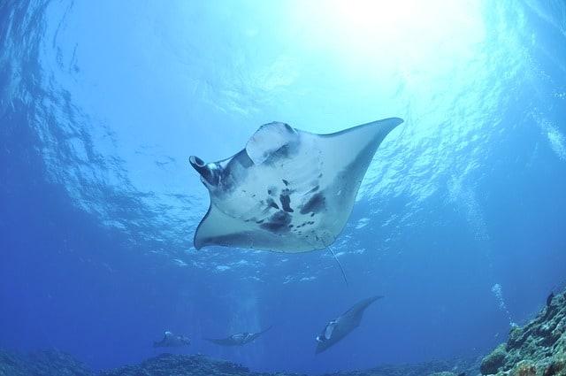 Freediving Spots