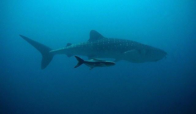 Unterwasser Drohne
