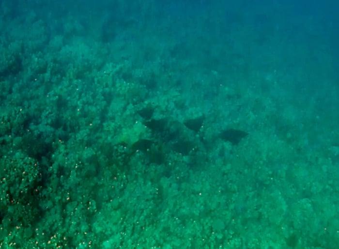 Schnorcheln in Makadi Bay