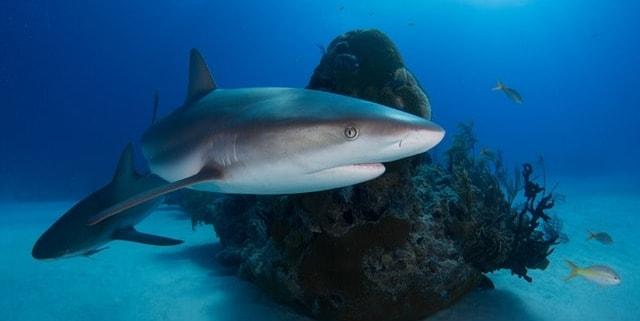 Haie im Mittelmeer